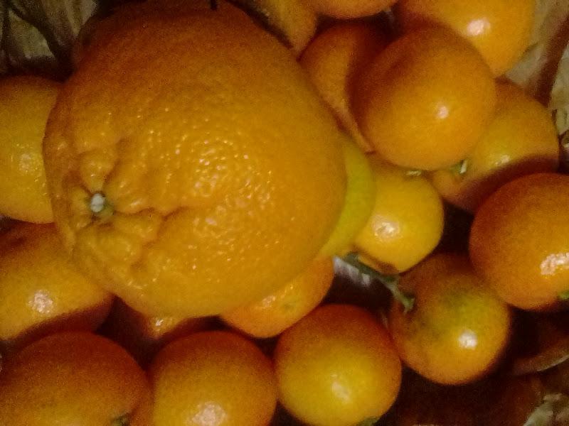 Orange my way di Piccina