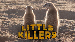 Little Killers thumbnail