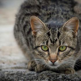 Cat winner! Pixoto.jpg
