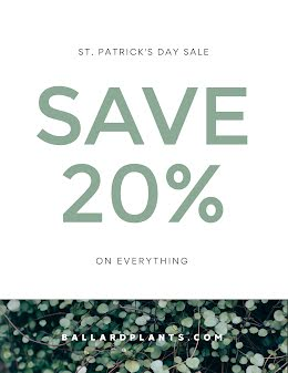 St. Patrick's Day Discount - St. Patrick's Day item