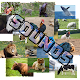 Guess The Animal - Sounds (game)
