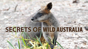 Secrets of Wild Australia thumbnail