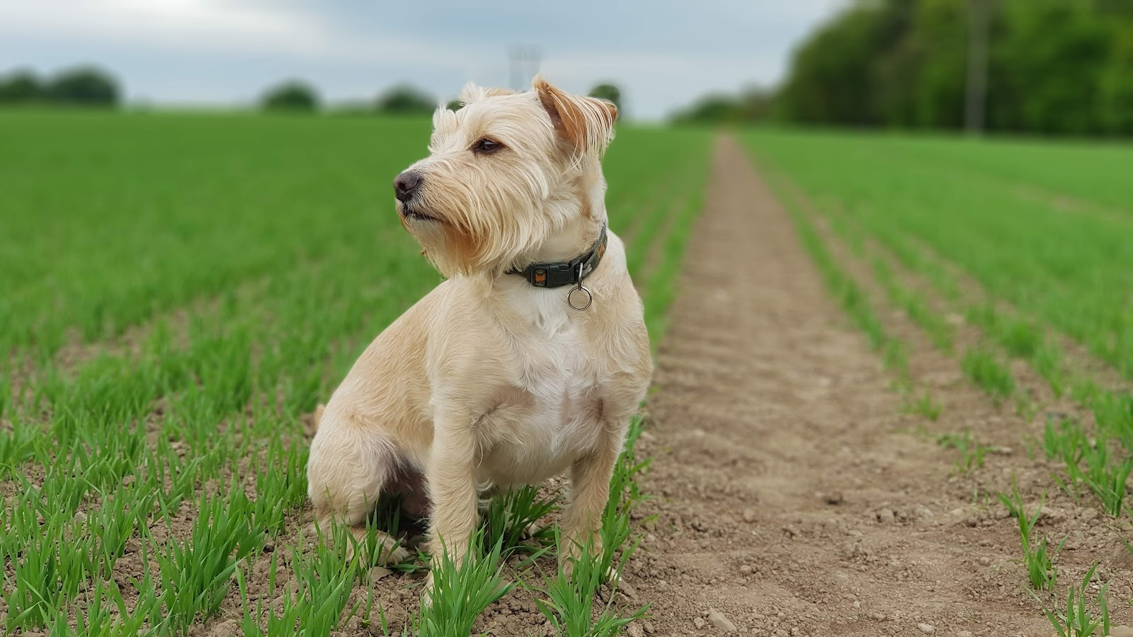 Dog glaucoma home remedies diet