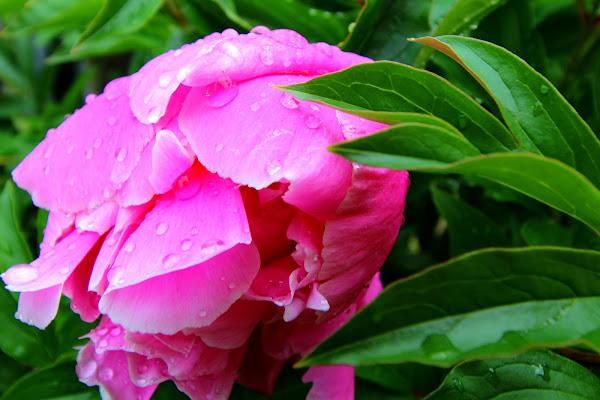 Rosa e Verde di abi313
