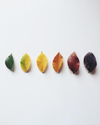 Autumn gradients di liberamenteinliberomondo