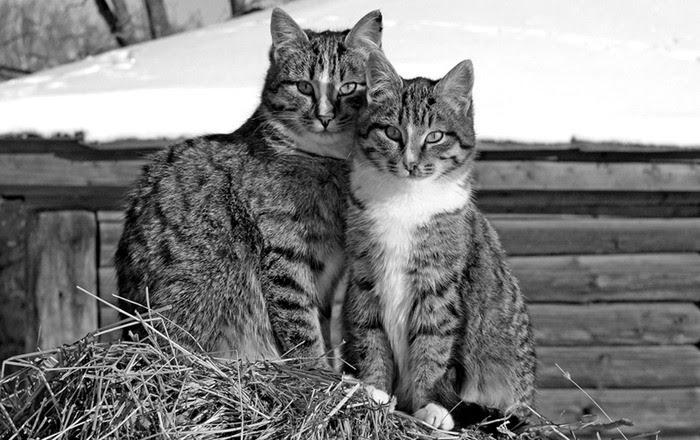 история про кота знакомая рассказала