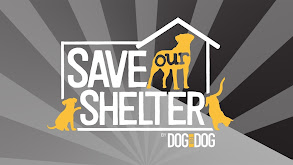 Save Our Shelter thumbnail