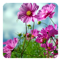 Sweet Flowers Live Wallpaper icon