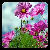 Sweet Flowers Live Wallpaper
