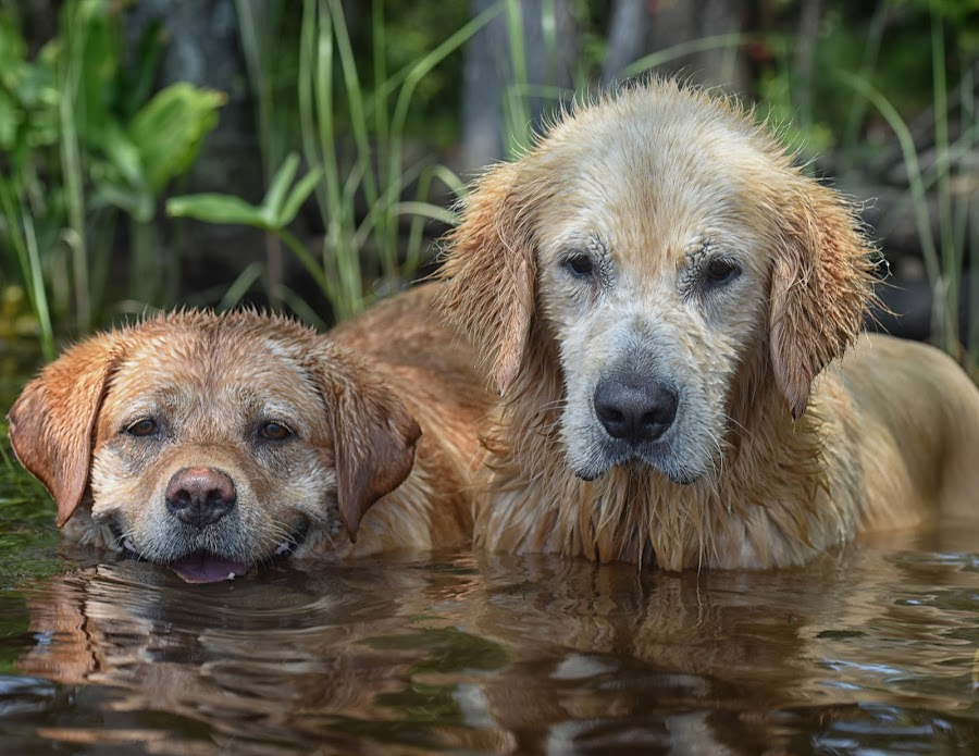 by James Betts - Animals - Dogs Portraits ( dogs water )