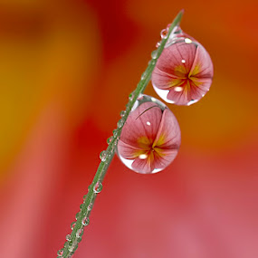 Finally found you... ♥ by Citra Hernadi - Nature Up Close Water