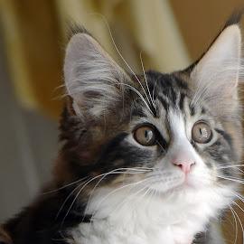 by Mark Luftig - Animals - Cats Kittens