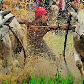 rock with a cows by Sapto Nugroho - Sports & Fitness Other Sports