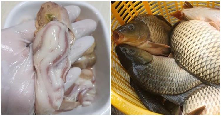 5 bộ phận của cá nhất định đừng ăn dù có thấy ngon: Chứa chất cặn bã, kim loại gây bệnh, bỏ đi thì hơn