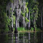 Bayou Sound