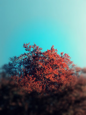 Primavera in rosso di agnes.chiari