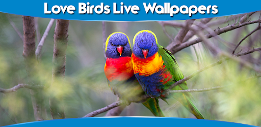 Love Birds Live Wallpapers Aplikasi Di Google Play