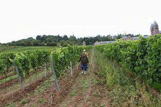 Photo: Turen gik ned gennem vinmarkerne, men der var meget pløret.