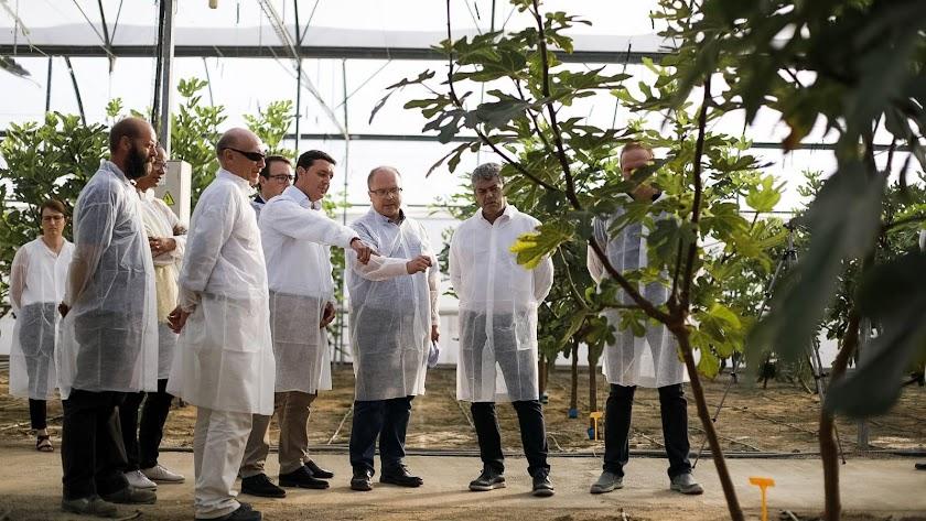 Visita del rector y el presidente de Diputación al cultivo de higueras