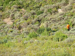 Photo: le sanglier est juste là, 10 mètres devant le chasseur, mais on ne le voit pas sur cette photo