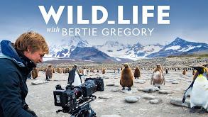 Wild Life thumbnail