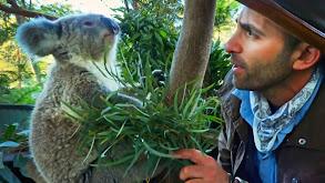 Marsupial Madness thumbnail