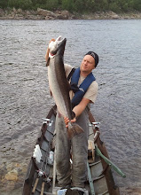 Photo: 2013Tenojoki 12,6kg ja soutuperho käppänä1.