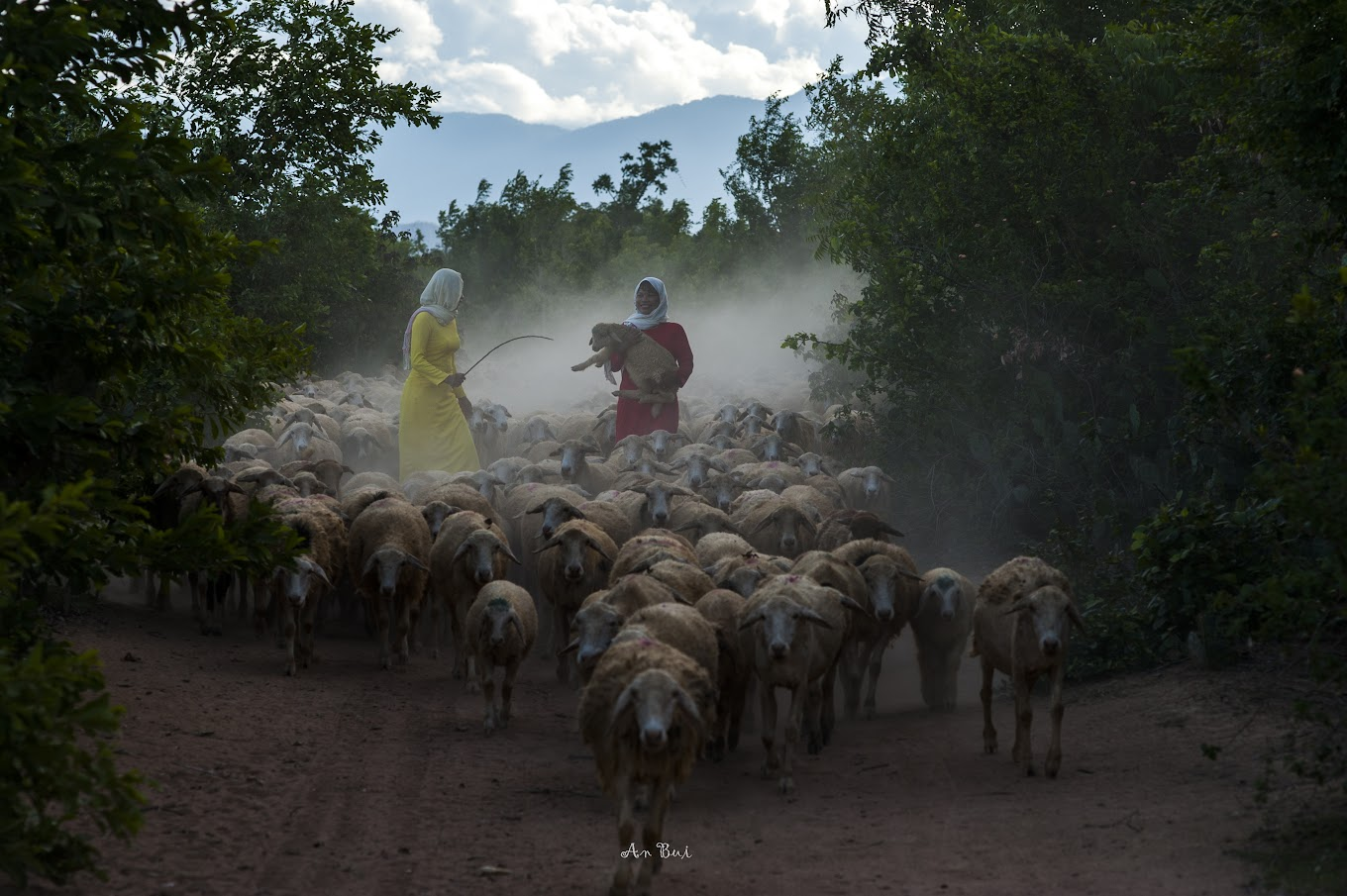 Photo shooting of thousands of sheep going home