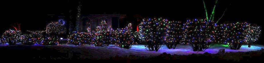 Photo: Christmas decorated bushes at night with multi-colored lights