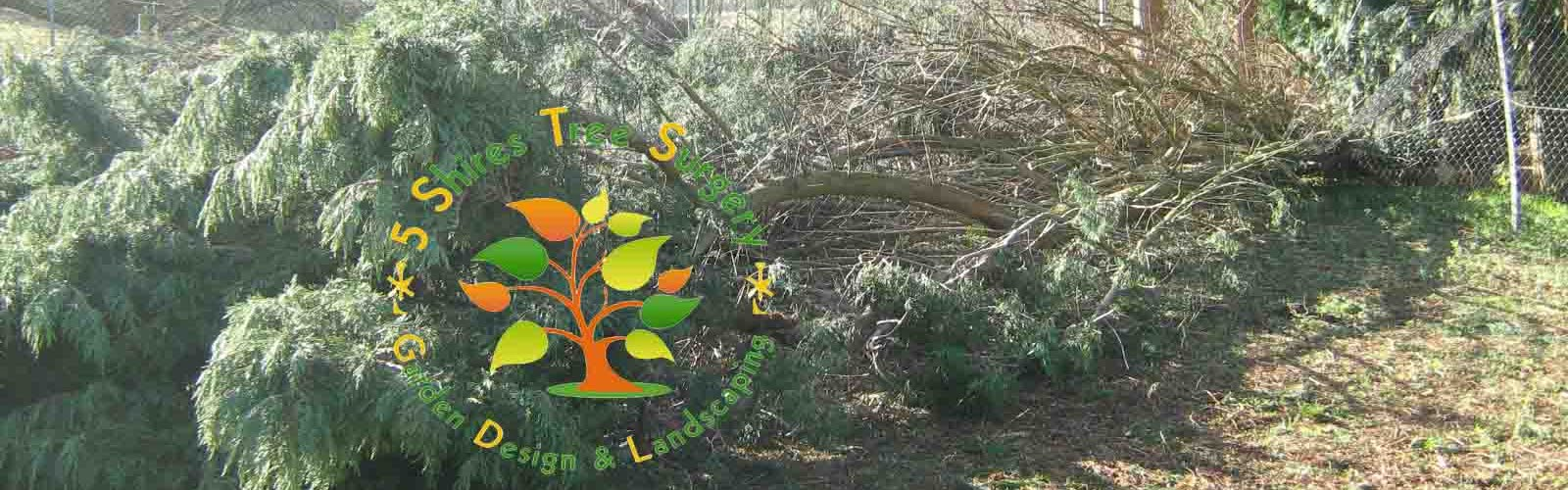 Expert Tree Surgeon West Midlands