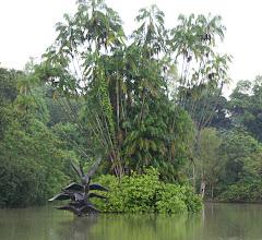 Photo: Year 2 Day 135 - Swan Lake in Singapore Botanical Gardens