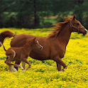 Puzzle - Beautiful Horses icon