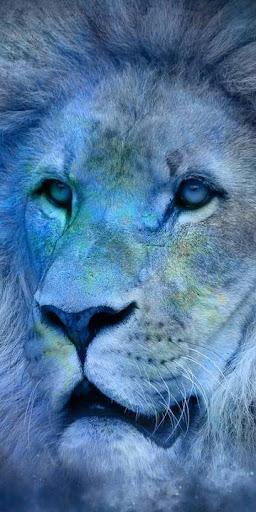 lion king wallpapers - best lion wallpapers hd screenshot 2