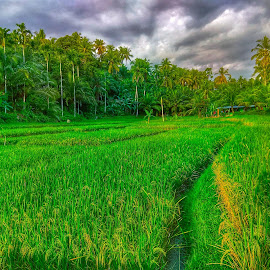 Kampuang by Evan Septian - Landscapes Prairies, Meadows & Fields