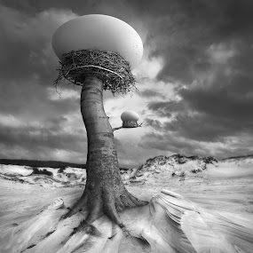 The Nests by Dariusz Klimczak - Digital Art Places ( dunes, tree, surreal, egg, kwadrart )