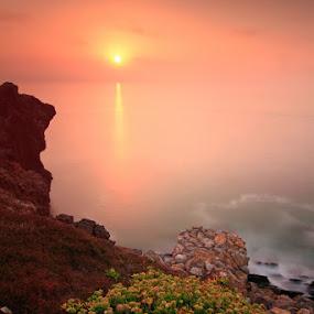 My Sun by Nuno Martins - Landscapes Sunsets & Sunrises ( são pedro de muel, sunset, flowers, rocks )