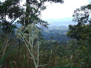 Photo: In the higher elevation we saw sub alpine family plants similar to the plants in Doi Chiang Dao in Chiang Mai