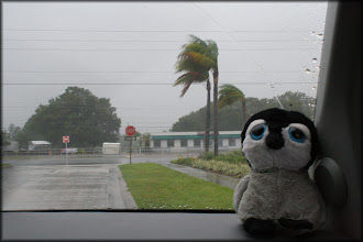 Photo: Carlisle braves Tropical Storm Debby to run out for dinner!