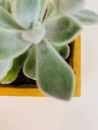 pot en béton avec plante