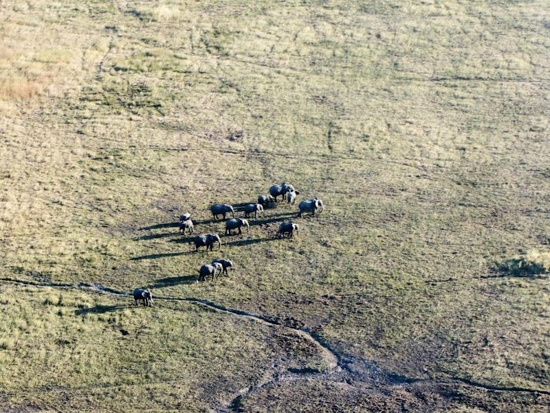 Elefanti di leorol