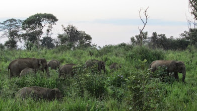 Photo: Minneriya National Park, Habarana