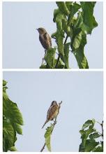 Photo: 撮影者:佐藤サヨ子 アリスイ タイトル:日野市民フェアのミニ探鳥会で 観察年月日:2015年10月18日 羽数:1羽 場所:多摩川中央線鉄橋下流 区分:貴重 メッシュ:立川4A コメント:この日、参加者全員を興奮の渦に巻き込んだのはこの鳥でした。カメラを持っていた人は全員が良く撮れたと思われます。私もこのような姿を撮ることができて喜んでいます。