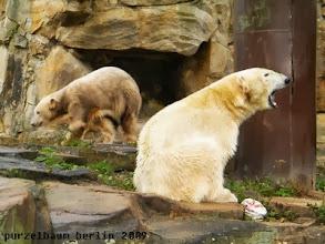 Photo: Knut ist auf Wanderschaft und Gianna muede ;-)