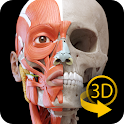 Muscular System - 3D Anatomy icon