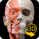 筋肉系 - 解剖学3Dアトラス - 人体の骨格と筋肉 Android