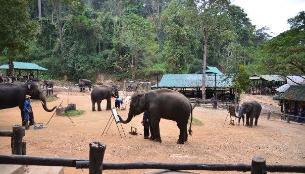Acampamento dos Elefantes Maesa