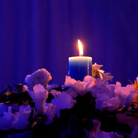 The soft light by Kaniz Khan - Artistic Objects Other Objects ( lit, candle, bloom, flowers, light, fire,  )