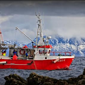lumpfish fishing by Kenneth Pettersen - Transportation Boats ( fishing, lumpfish, winther, andøy, norway )