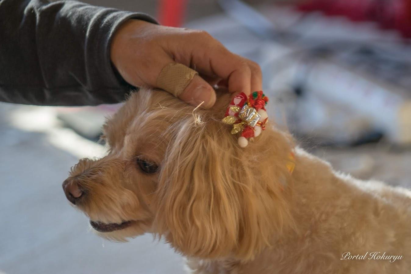 クリスマスバージョン犬用リボン