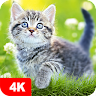 cats.wall7Fon